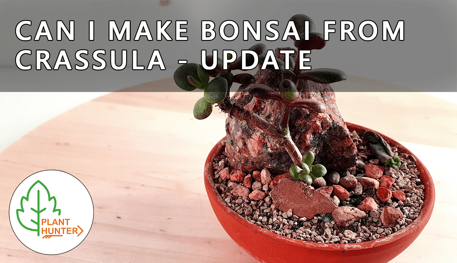 Succulent bonsai update